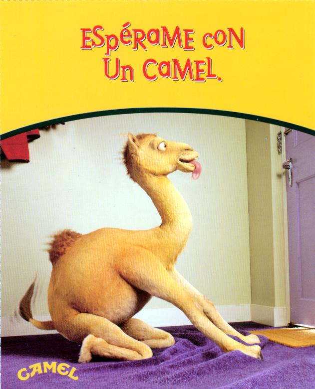 Camel_10
