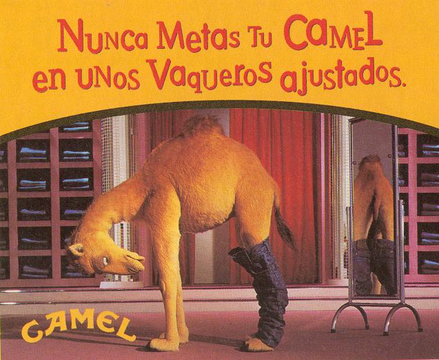 Camel_20