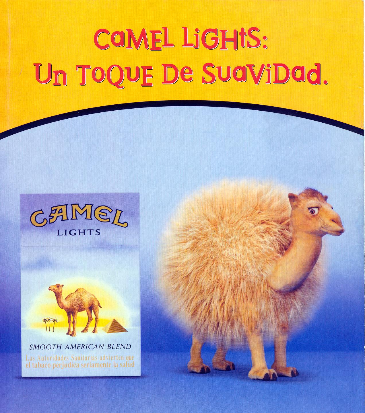 Camel_24