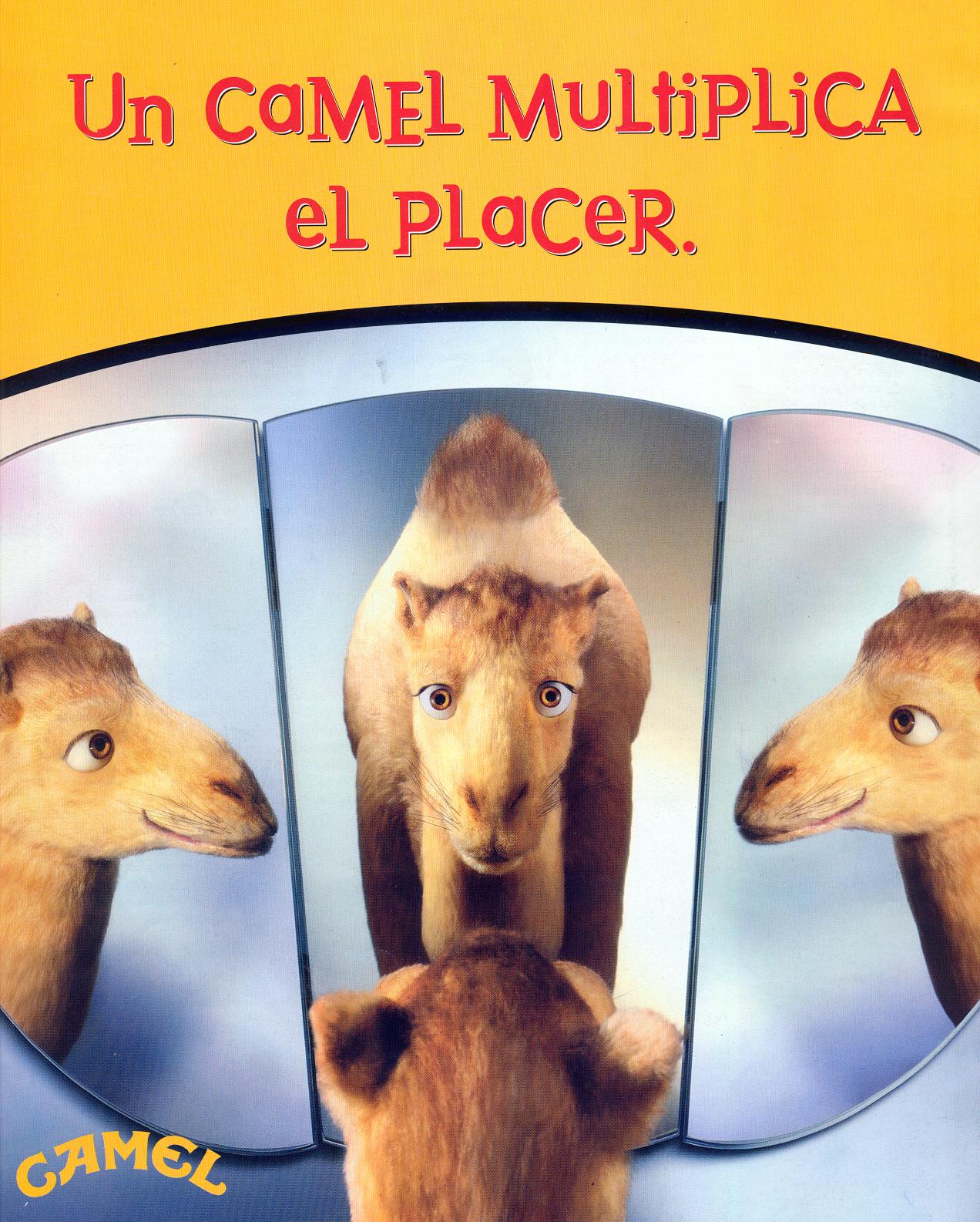 Camel_26